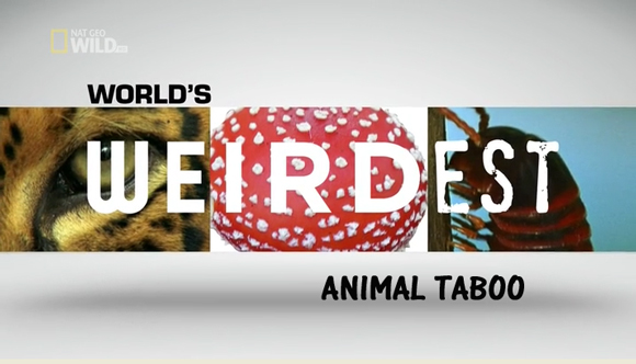 National.Geographic.Wild.Worlds.Weirdest.Animals.Taboo